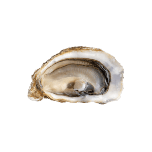 entrega de ostras fine de claire bio daniel sorlut