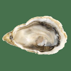 Entrega de ostras spéciales de claire