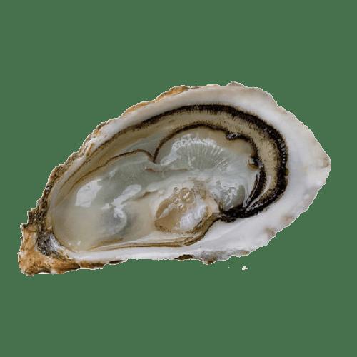 entrega de ostras fine de claire