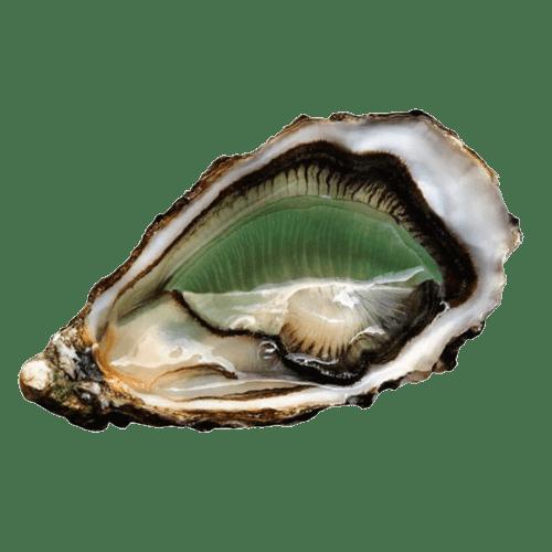 entrega de ostras fine de claire label rouge daniel sorlut