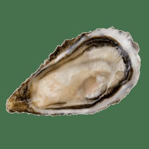Entrega de ostras speciales sorlut 3